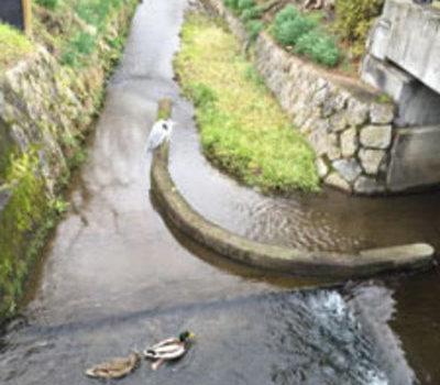 京都北山へカウンター施工のサムネイル