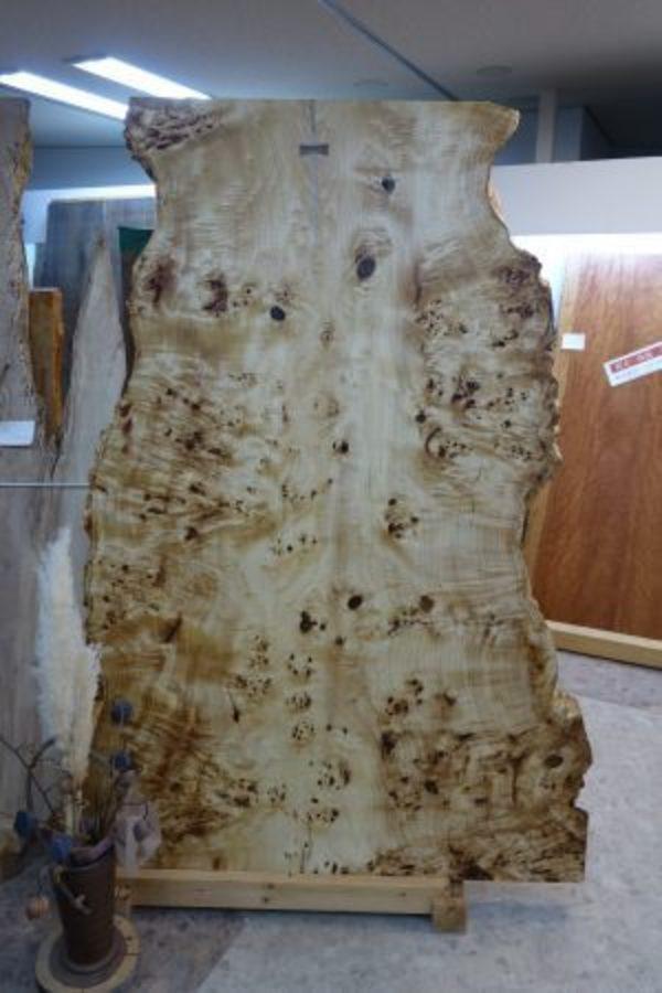 ポプラの瘤杢一枚板